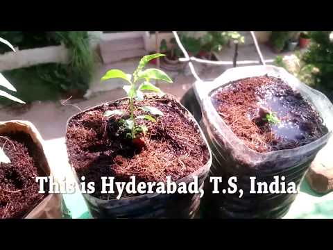 How to Grow Almond Tree From Seeds Update_1