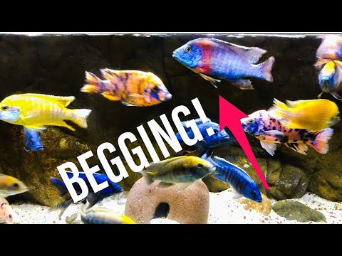 Stop Overfeeding Your Aquarium Fish!