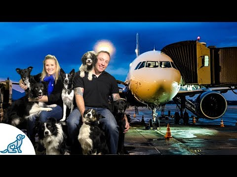 Flying With Your Dog- Safety Tips