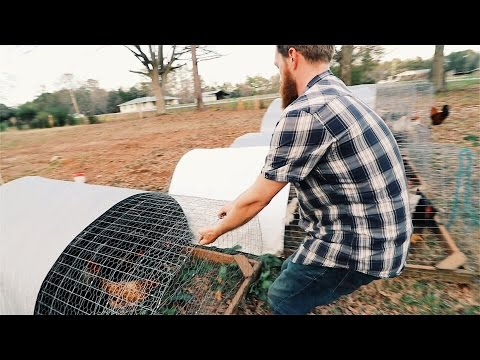 the $5 Chicken Tractor