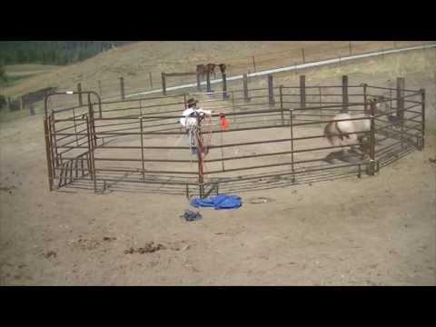 Colt Starting a Wild Horse