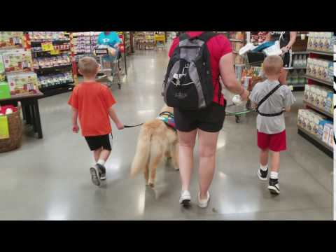 Autism Service Dog in Grocery Store