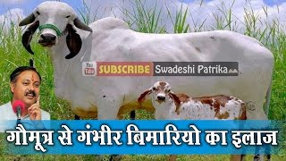 Rajiv Dixit Cow - All About Cow Photos