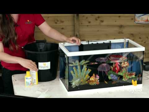 How to Maintain Your Fish Tank | Hayes Garden World