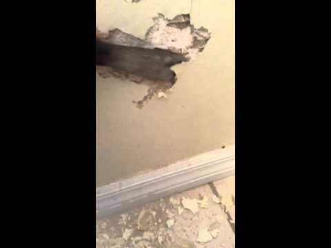 Hidden termite damage- a total bummer!!