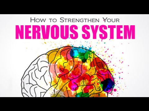 Nervous System | How to Strengthen Your Nervous System