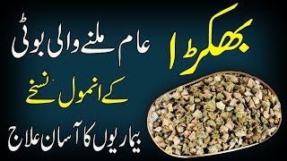 Best Treatments of Gokhru || Medical use of Gokhru || Benefits of Small Caltrops In Urdu /Hindi