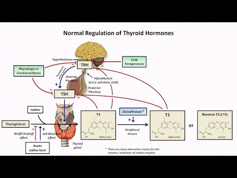 Thyroid Hormones and Thyroid Function Tests