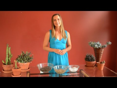 DIY Succulent Potting Soil