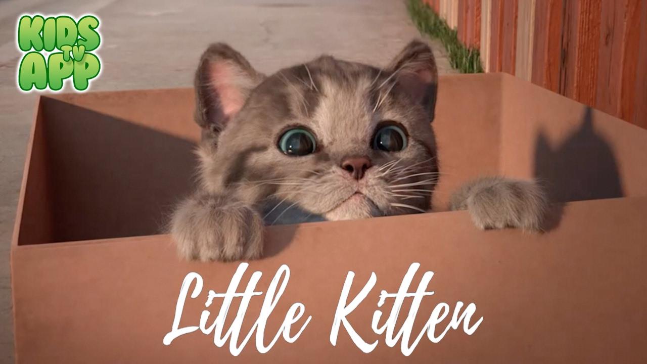 Little Kitten - My Favorite Cat (Fox and Sheep GmbH) - Best App For Kids