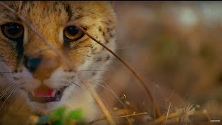 Earth: One Amazing Day | BBC Earth