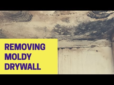 How To Remove Mold Safely: Mould Removal (Walls)
