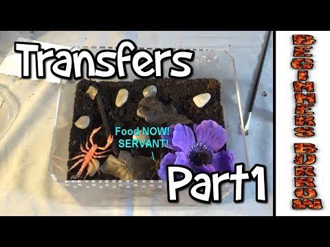 Terrestrial Transfers Part 1 - Beginners Burrow