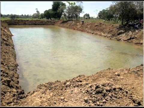 Fish daalne se pehley pond ki tayari Dr Ashraf Sahibzada