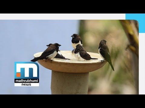 Syamkumar Provides Succour To Birds In Summer   Mathrubhumi News