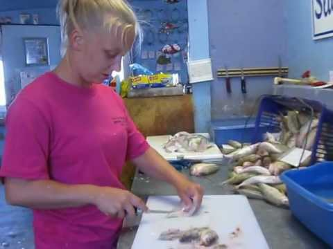 how to fillet a yellow perch