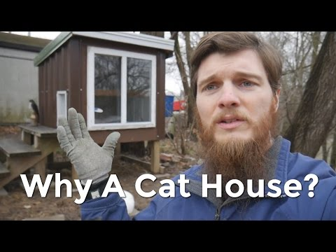 Why We Built a House for the Cats