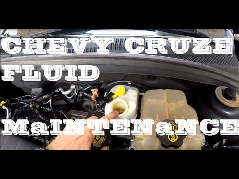 How to check your Chevrolet Cruze fluids. Maintenance.