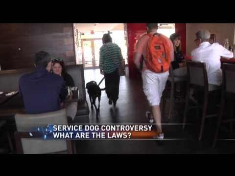 Service Dog controversy: what are the laws?