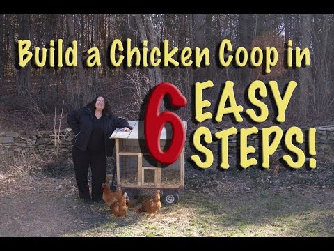 Build a Chicken Coop in 6 Easy Steps!