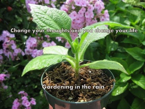 Gardening in the rain to combat the triggers of depression