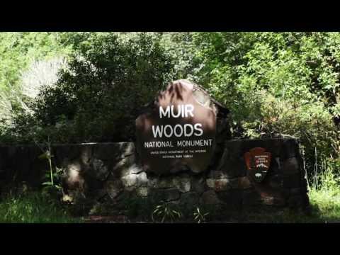 Muir Woods Tour - Tower Tours