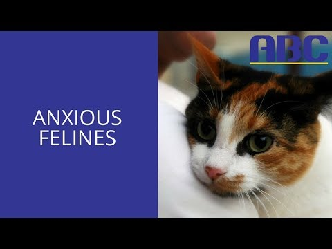 Signs Your Cat is Stressed (And Ways to Help) | Animal Behavior College