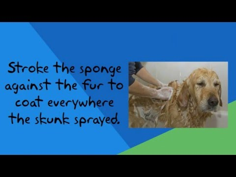 Skunk Smell Removal from Your Dog - DIY - It's Easy!