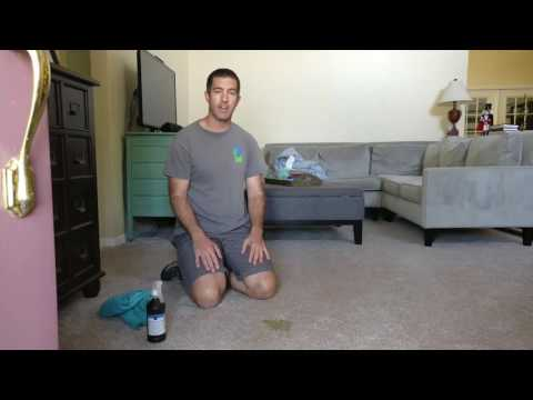 How to remove pet stains out of your carpet