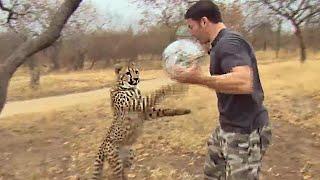 Cheetahs Play Football | Deadly 60 | Series 3 | BBC