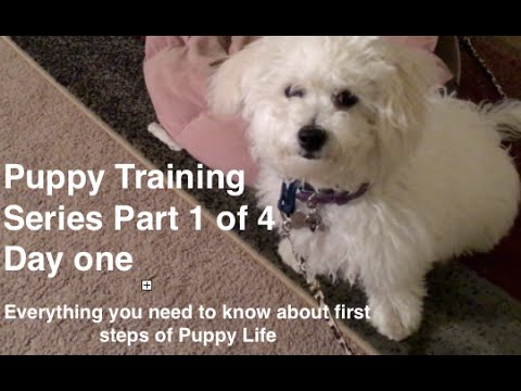 Puppy Training Series Part 1 of 4:  Best Crate Training Video on first day with Puppy