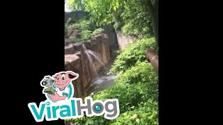 Cincinnati zoo kills gorilla to save boy who fell into enclosure [HD Original]