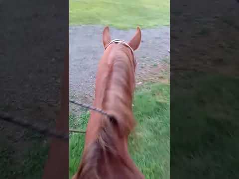 Training my quarter horse