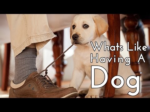 Things to know : Before you buy a dog / puppy [FUNNY] [CUTE]