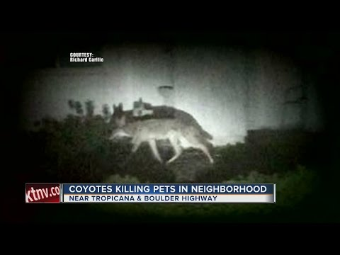 Department of Wildlife offers tips to keep coyotes away