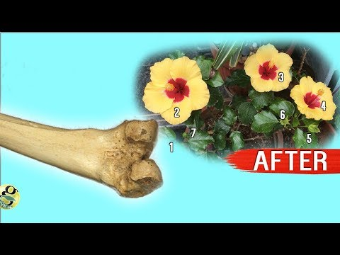 INCREASE FLOWERING IN PLANTS: GUARANTEED 10 TIPS | How to Get More Flowers (Bloom Boost Secrets)