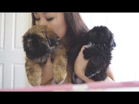 Saying GOODBYE to My Puppies