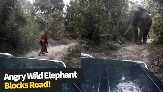 Terrifying moment: driver comes face-to-face with angry elephant