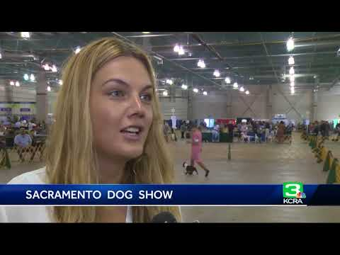 Sacramento Dog Show is one of the longest-standing shows in nation