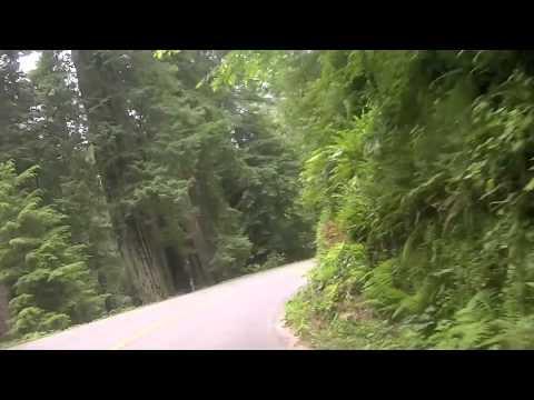 California Redwoods Hwy 101