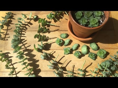 Floating Succulent Update & Spring Propagation