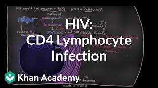 How HIV infects us: CD4 (T-helper) lymphocyte infection | NCLEX-RN | Khan Academy