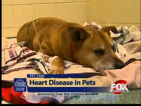 Dogs & cats at risk for heart disease