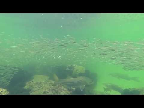 Free Dive Snorkeling in Naples Florida
