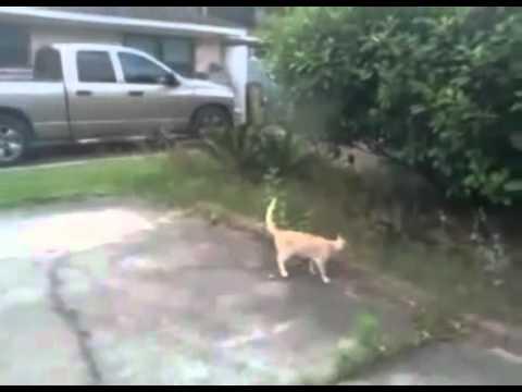 Ninja Cat Catches Bully Bird