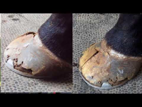 Horse Hoof Care - How Important is A Perfectly Balanced Hoof Trim?