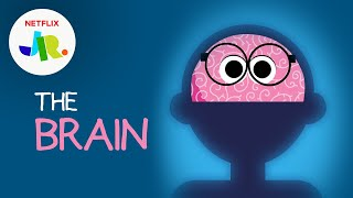 What is a Brain? 🧠 StoryBots: The Human Body for Kids   Netflix Jr