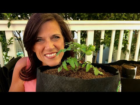 🍅 LIVE: Small Space Garden Tips and GIVEAWAY Drawing (REPLAY)