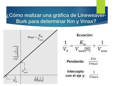 ¿Como realizar un gráfico de cinética enzimática Lineweaver-Burk?