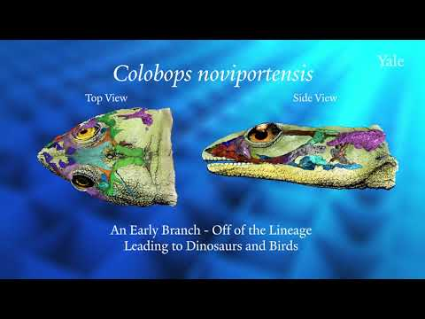 Paleontologists put the bite on an ancient reptile from New England